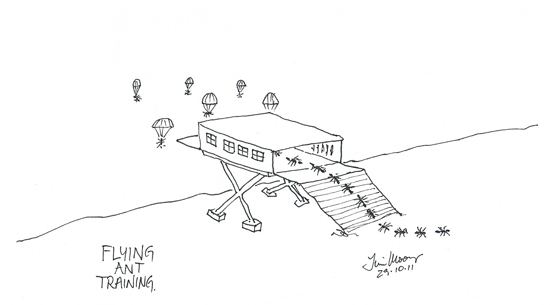 cartoon sketch of ants flying