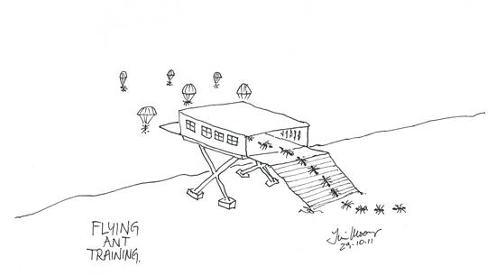 cartoon sketch of ants flying